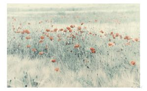 More Poppies by Luxxs
