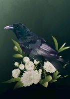 The Silent Raven by Roarsef