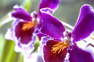 Orchid by andy1349