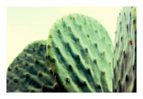 Three Cactus Leaves by CaseyAdamF