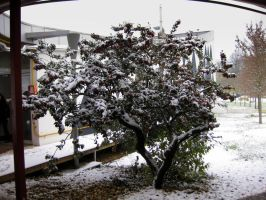 ENSAP under the snow 5 - tree by AuroraxCore