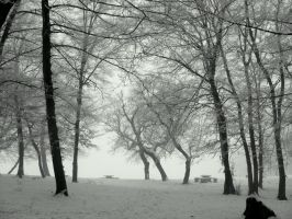 Winter Trees by stefanpriscu