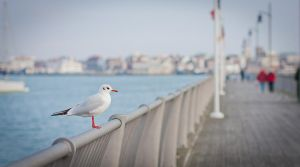 Seagull by mrk