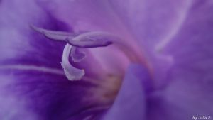 violet... by Maila-M