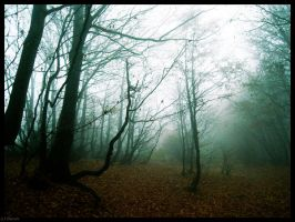 .mystical forest. by Aereth-chan