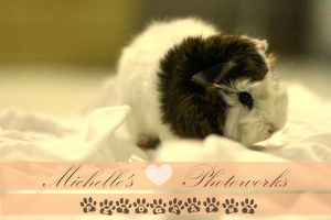 Chesnut as my new Guinea Pig by mellemichellelatif