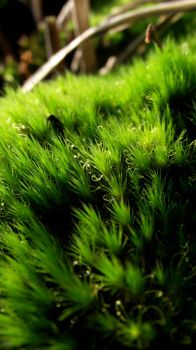 moss so green by Goth-and-other-stuff