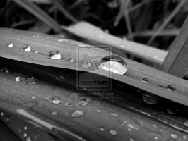 Water Drops black version by Photoartistic26