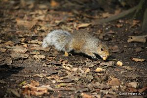 Hungry Squirrel by MichaelJTopley
