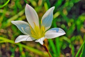 Easter Lilly by EJordanPhoto