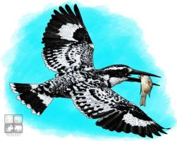 Pied Kingfisher by rogerdhall