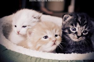 Kittens by CloudNinePhotography