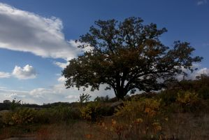 Gettysburg Autumn 03 by touch-the-flame