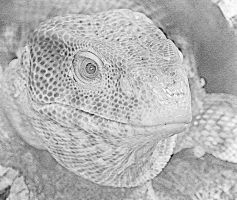 Photo to Sketch Lizard by markeverard