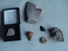 Fossil package SOLD by Lot1rthylacine