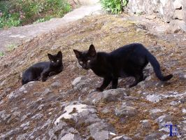 Gatitos negros 2 by ToniTeror