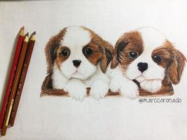 Color Pencil Drawings: 2 Cute Puppies by marccoronado