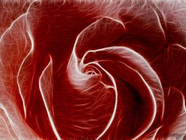 Frose Red by digitalpix4all