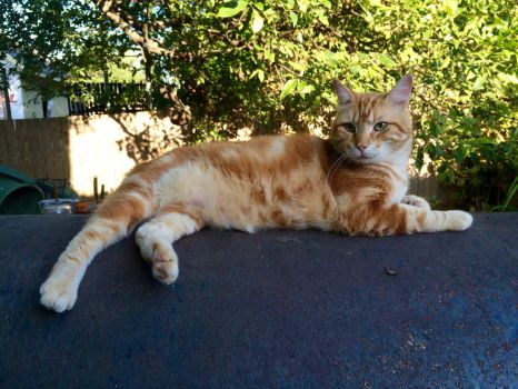 Tomas on top of the outside smoker by Scarletcat1