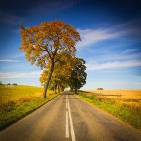 Autumn road by mjagiellicz