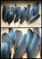 Magpie Feathers by CabinetCuriosities