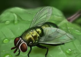 green fly 2012 by Trutze