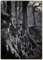 Trees and Stones 04 by HorstSchmier
