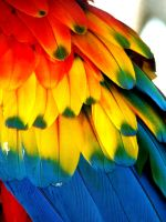 Macaw Feathers by Animal--Lover