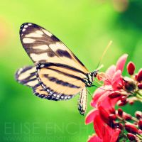 Nectar by EliseEnchanted
