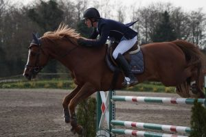 Chestnut Horse - Show Jumping stock - 11.9 by MagicLecktra