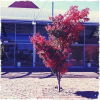 The Colour's of Autumn by the-wire