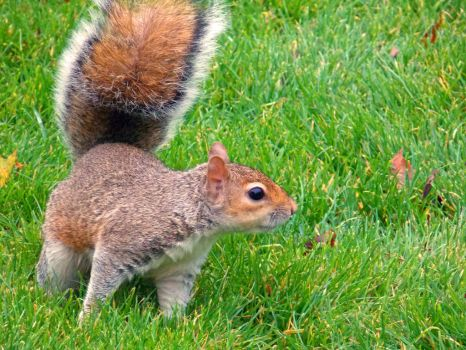 Curious squirrel by AmyKPhotos