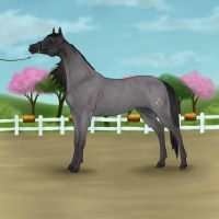 Donny's Debut - Spring Into Spring Stallion Halter by ChrissyMax
