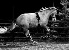 black and white #3 by imtl