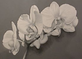 White Orchids (mixed media on canvas) by AdrianMoraru