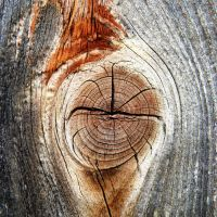 knothole by augenweide