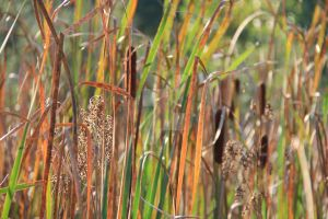 In the tall grass by thatlastmonday