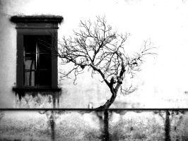 Tree And Window by tortagel