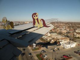 semper. kiki. what are you you doing on the wing? by boeingboeing2