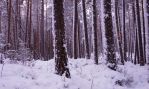 Winter forest by MonikaTherese