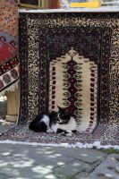Istanbul - Cat at carpet store by puppeteerHH