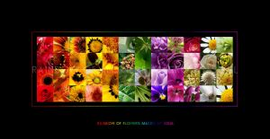 Rainbow Of Flowers by SouLitta