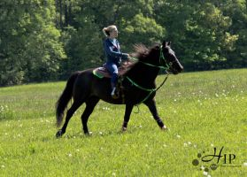 Galloping by CountryGirl11