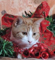Kitty Christmas by Adeleene