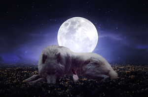 PhotoManipulation - The Dream with the Big Wolf by Wolt-s