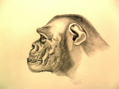 Chimp by Gogs87