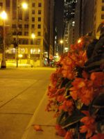 chicago by Bails