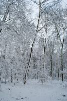 Snowscape Stock 69 by Sed-rah-Stock