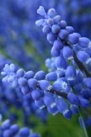 Blue Bells by Aziot