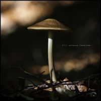 Pilz... by ArkanumTenebrae
